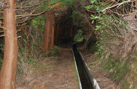 Levadas - Praia do Norte - Maps and GPS Tracks - Hiking Routes in Faial - Trails in Azores