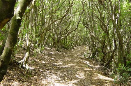 PRC4TERMonte Brasil - Maps and GPS Tracks - Hiking Routes in Terceira - Trails in Azores