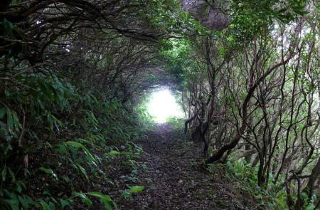 Trilho Fajã dos Vimes – Lourais – Fajã de São João