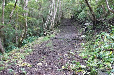 PR7PICCaminho das Voltas - Mapas e GPS - Percurso Pedestre no Pico - Trilhos dos Açores
