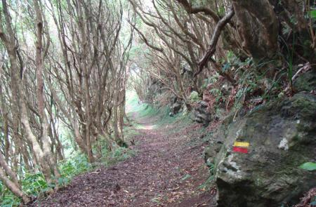 Rocha da Fajã, Maps and GPS Tracks, Hiking Routes in Faial, Trails in Azores