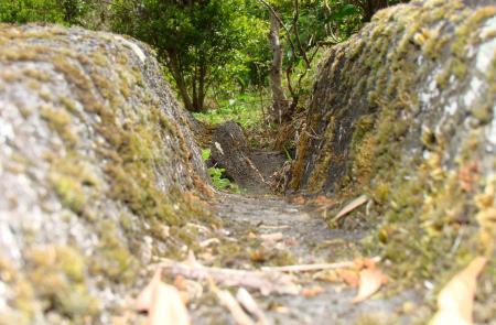 PRC8TERRelheiras de São Brás - Maps and GPS Tracks - Hiking Routes in Terceira - Trails in Azores